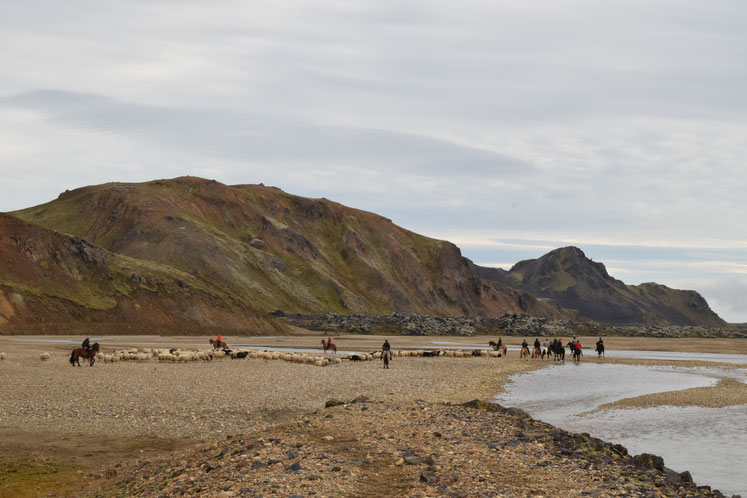 Sheep round-up, Landmannalaugar
