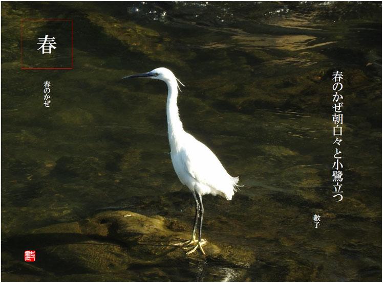 小鷺(こさぎ) 2018/05/04作句 2018/04/28撮影