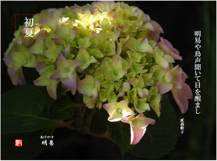 明易(あけやす) 2017/06/22作句