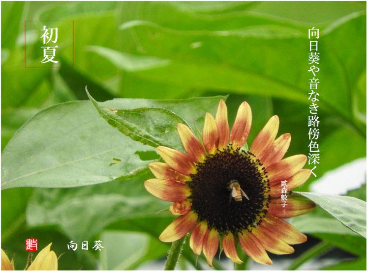 向日葵(ひまわり)2017/07/13作句