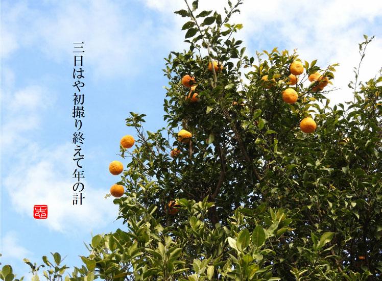 三日はや初撮り終えて年の計 2017/01/03作句 170102撮影