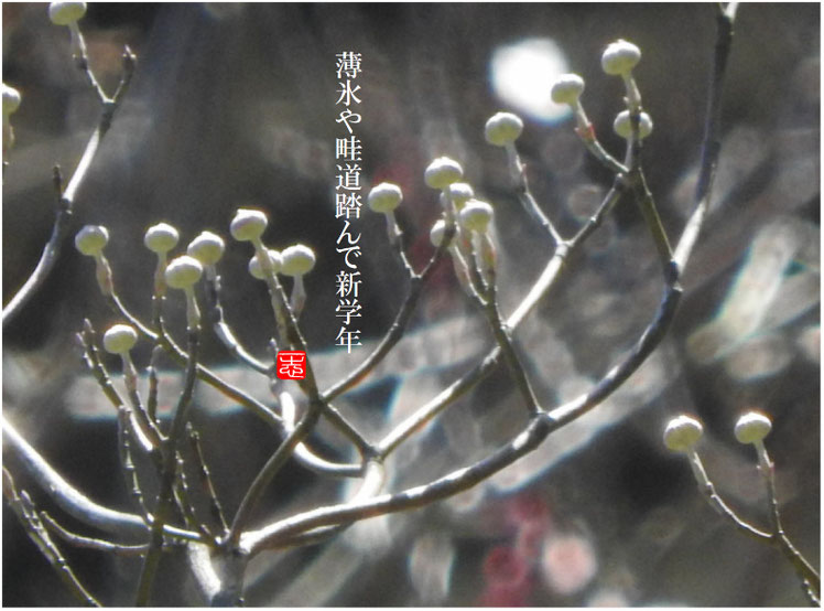 薄氷(うすらい) 散策路 子の芽撮影 170102作句