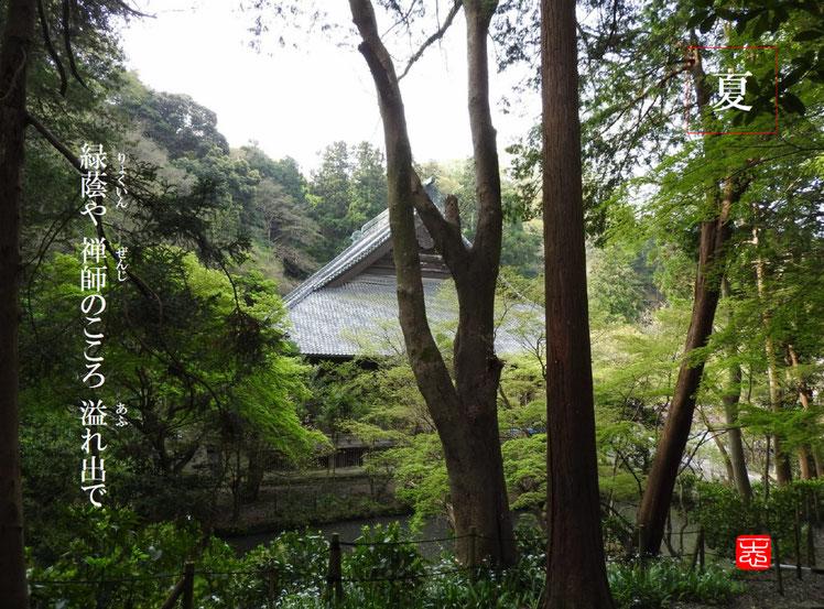 緑蔭や禅寺のこころ溢れ出で  緑蔭(りょくいん)禅師 鎌倉妙本寺 160716撮影