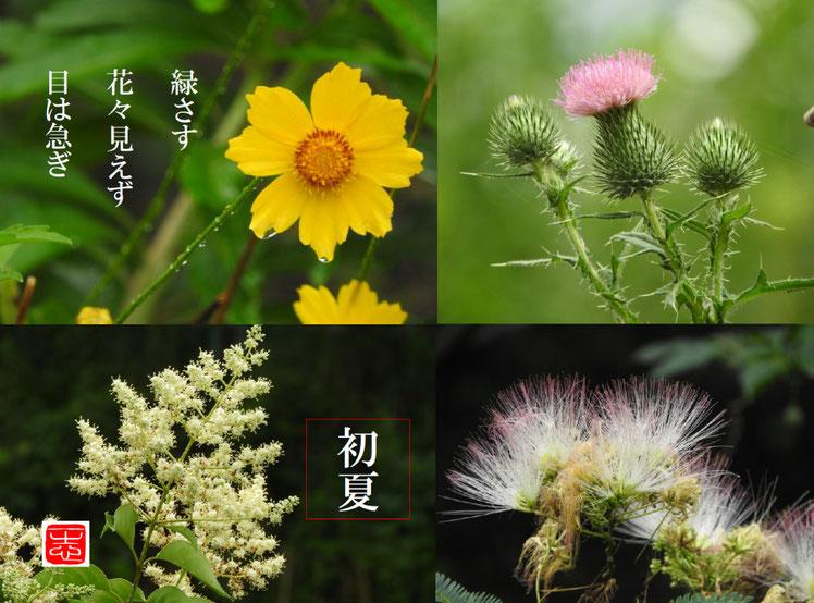2019/07/09作句 散策路の花