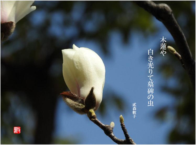 2017/04/26作句 自宅庭 木蓮