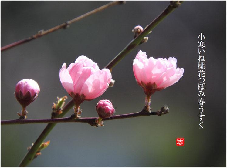 2017/03/31作句 散策路 桃の花