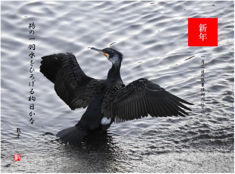 鵜の一羽水をひろげる狗日かな 2019/01/02作句 散策路河川 2019/01/02撮影