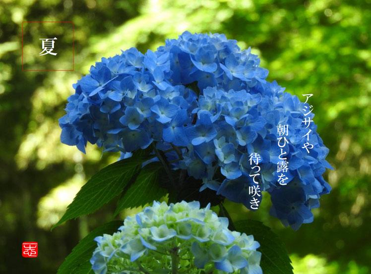 2016/06/02作句 北鎌倉 明月院 紫陽花