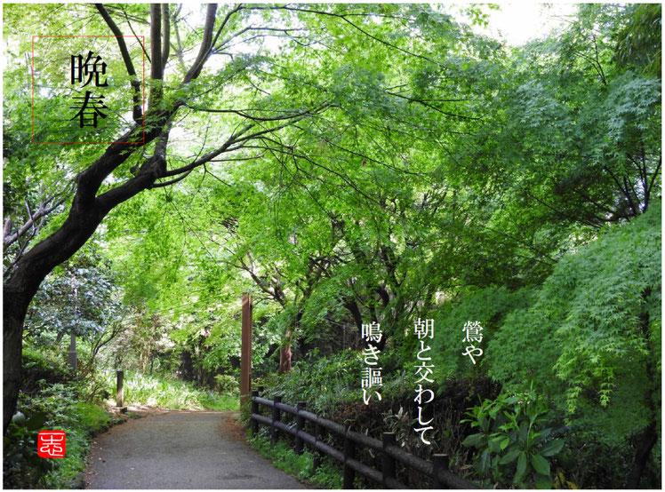 鶯(うぐいす) 散策路 160422撮影