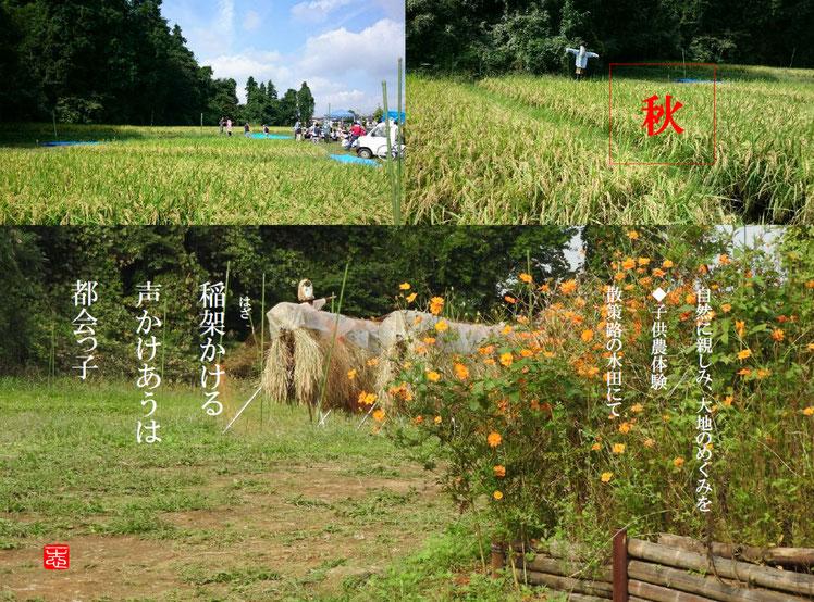稲架(はざ) 散策路 161014撮影