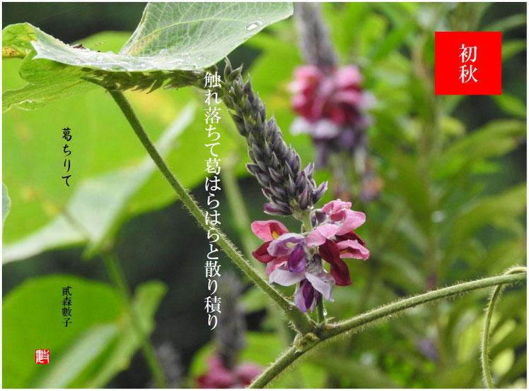 2017/09/07作句 散策路 葛の花
