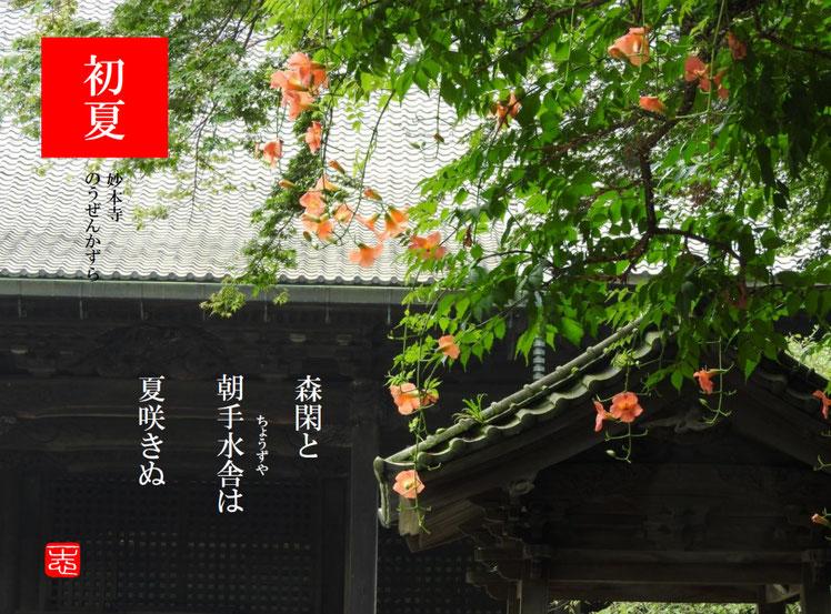 手水舎(ちょうずや)鎌倉妙本寺 凌霄花(のうぜんかずら)2016/07/16作句 撮影