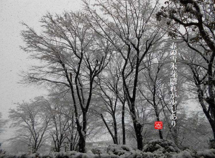 春の雪(はるのゆき)自宅 春の雪撮影 2017/01/02作句