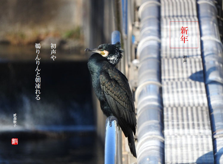初声や鵜りんりんと朝凍れる 2018/01/08作句 180102撮影 (ふりかな:あさしばれる)