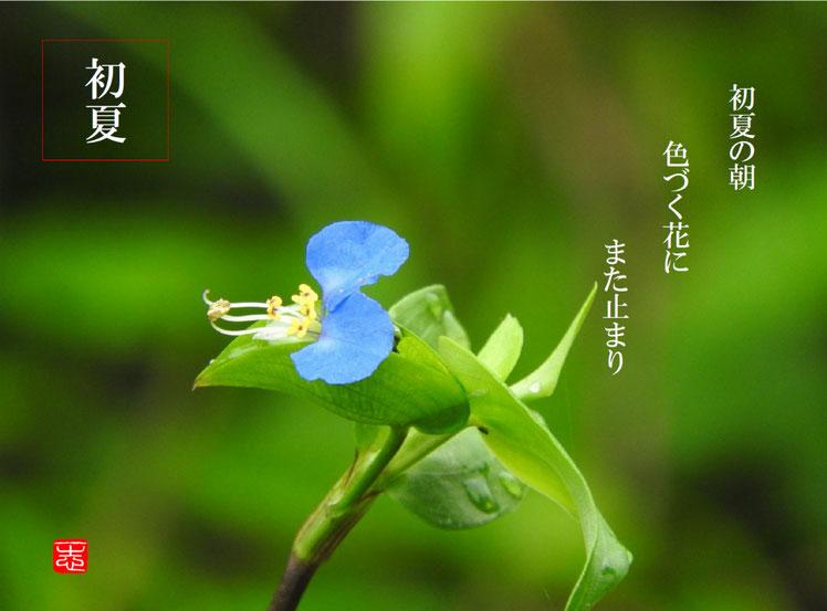 2016/07/09作句 散策路