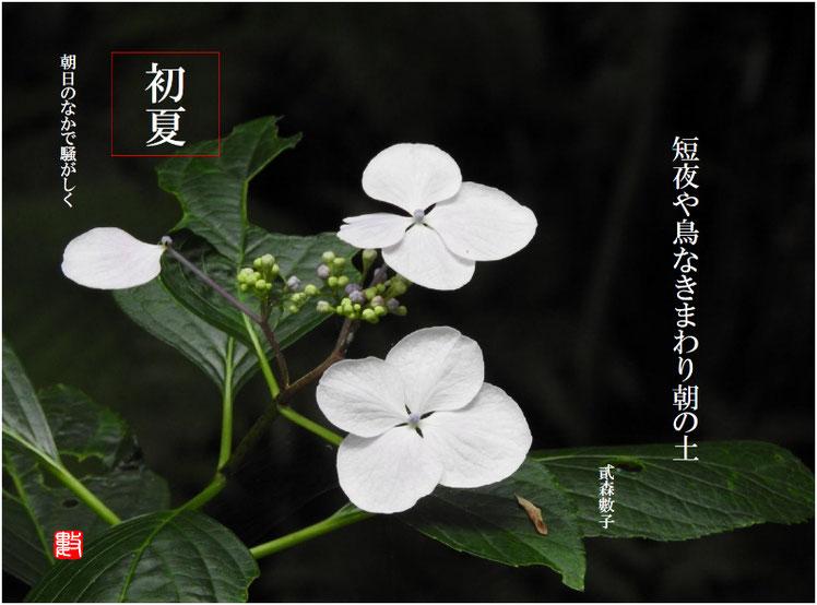土の朝(あさのつち) 2017/07/02作句