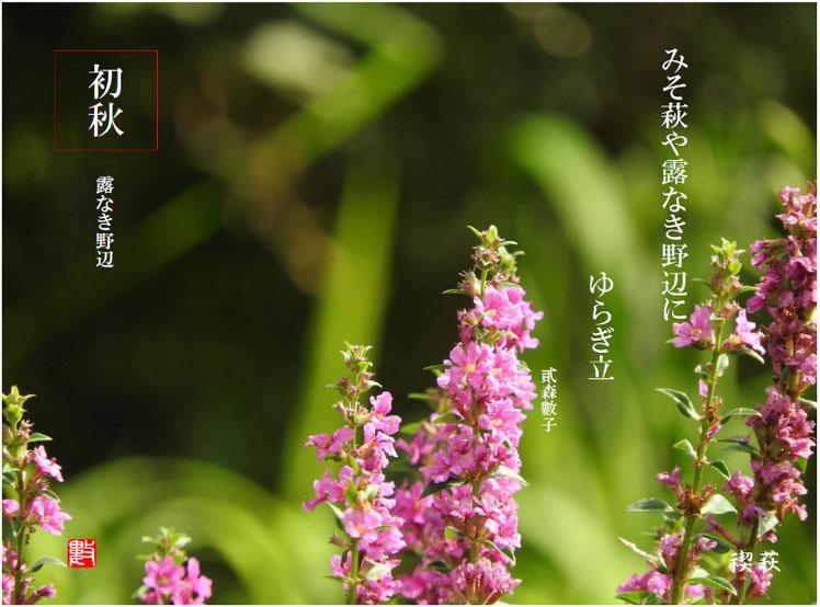 2017/07/19作句 散策路 禊萩