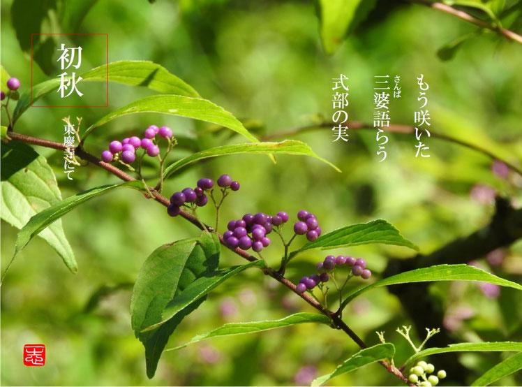 もう咲いた三婆語らう式部の実  紫式部(むらさきしきぶ)北鎌倉東慶寺 160909撮影