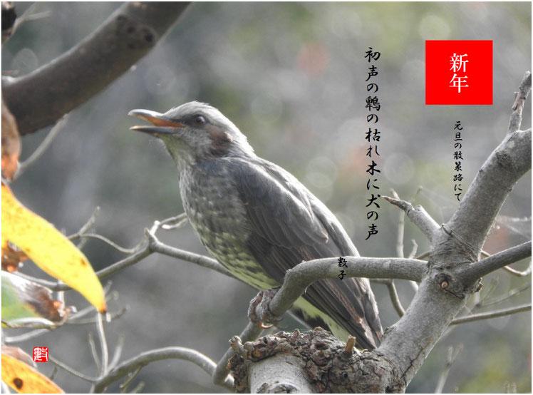 初声の鵯の枯れ木に犬の声 2019/01/01作句 散策路 2018/12/26撮影