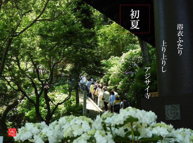 2016/06/10作句 鎌倉 長谷寺 紫陽花ロード