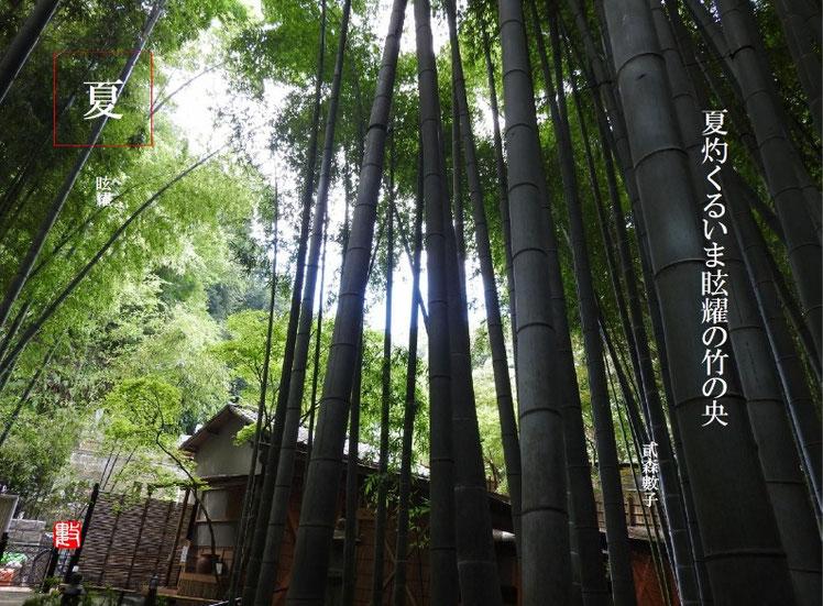 夏灼くるいま眩耀の竹の央  眩耀(げんよう)2017/08/09作句