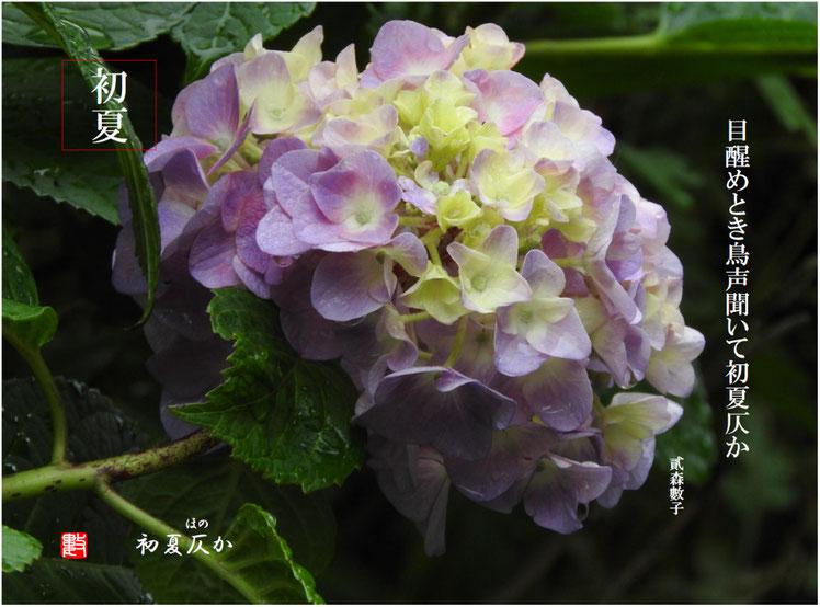 初夏仄か(しょかほのか) 2017/06/18作句
