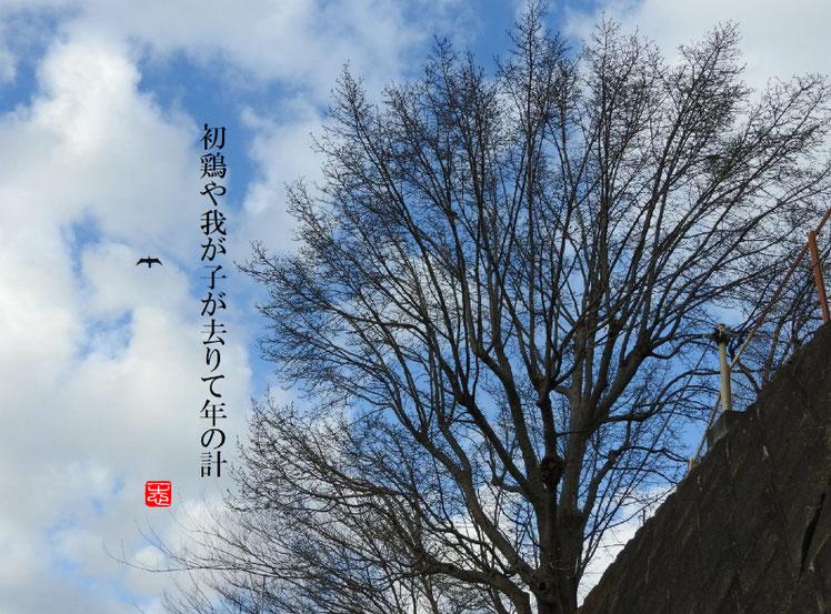 2017/01/03作句 170102撮影