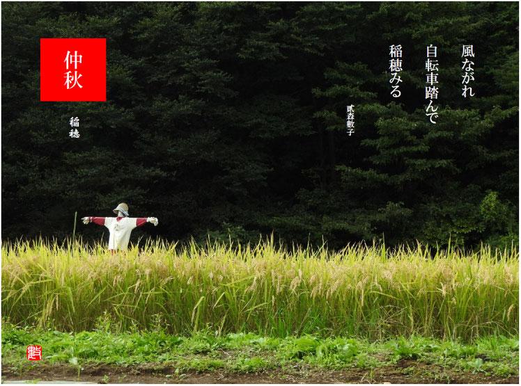 2017/09/27作句 散策路 稲穂