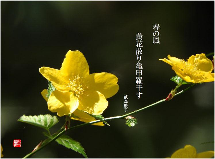 2017/04/26作句 散策路公園 八重山吹