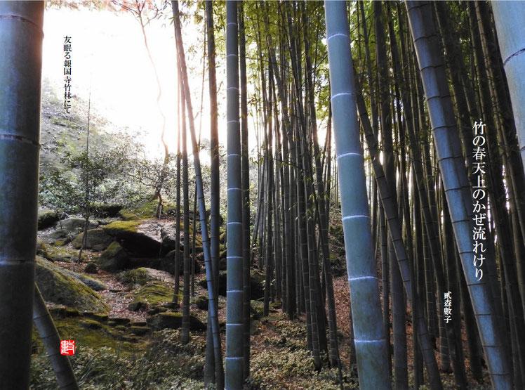 竹の春天上のかぜ流れけり 2018/03/01作句 2017/12/09撮影 報国寺竹の庭