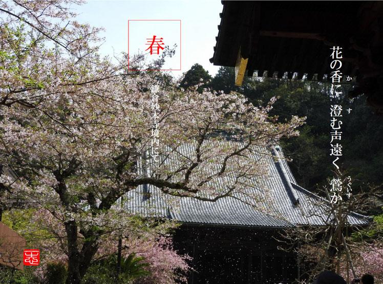 鶯(うぐいす)鎌倉妙本寺 2016/04/09作句 撮影