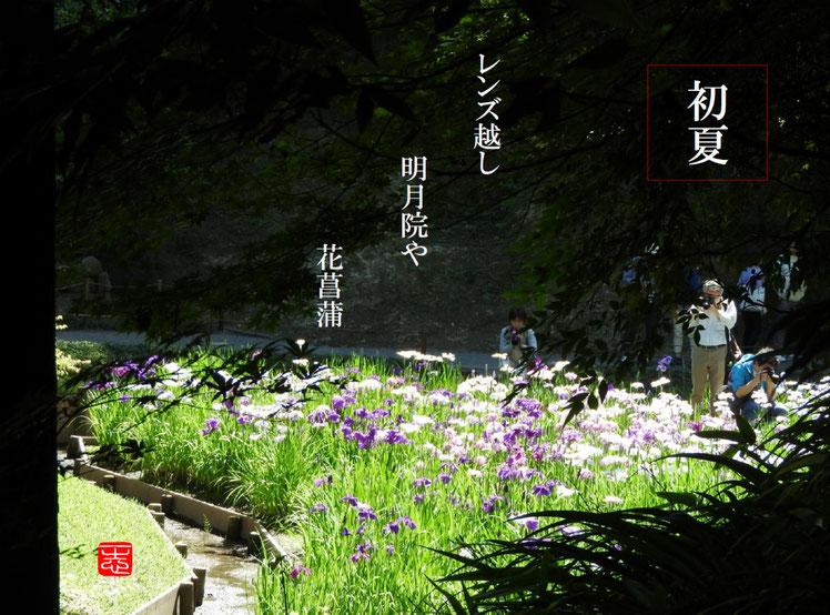 2016/06/02作句 北鎌倉 明月院 花菖蒲