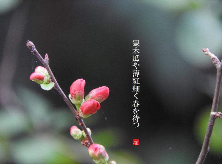 2017/02/08作句 散策路 寒木瓜