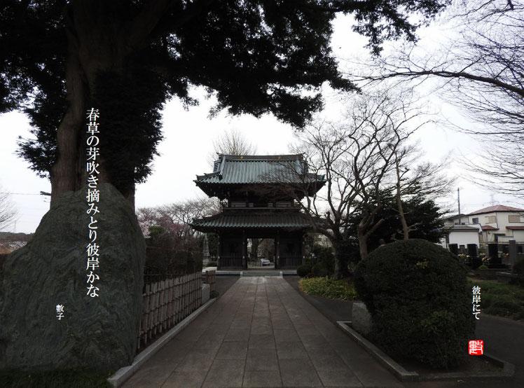 彼岸(ひがん) 2018/03/20作句  福泉寺 2018/03/19撮影