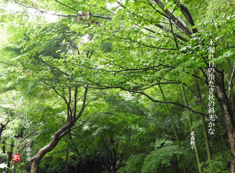 木漏れ日の冷たき秋の斜光かな 2018/03/01作句