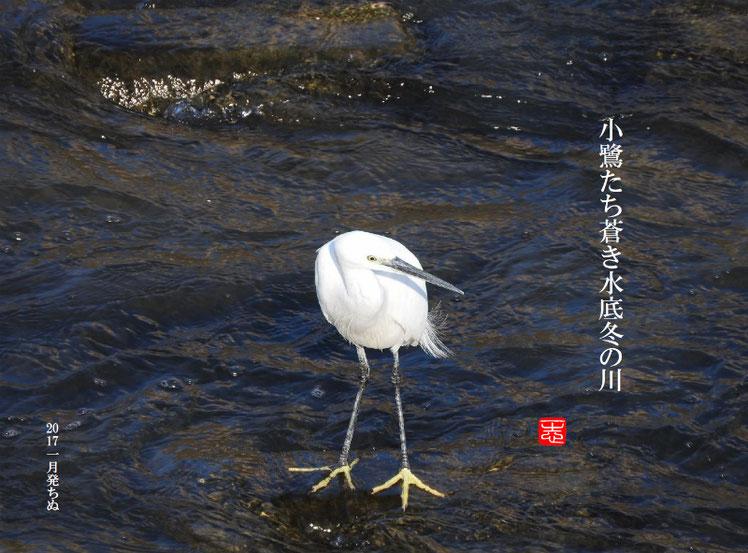 2017/01/04作句 散策路河川 小鷺