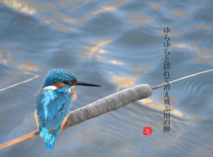 川蝉(かわせみ) 散策路 161224撮影