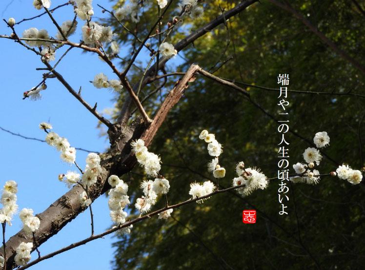 端月や二の人生の頃あいよ 2017/01/25作句 170207撮影