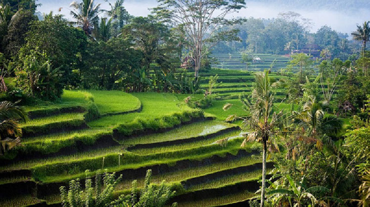 Bali Surya Tours Lovina, your tour operator for Highlights and Activities in Lovina
