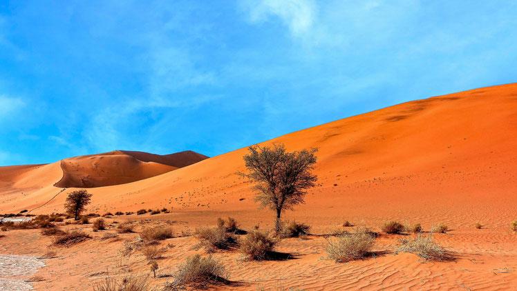 Végétation dunaire, Dunes du Namib