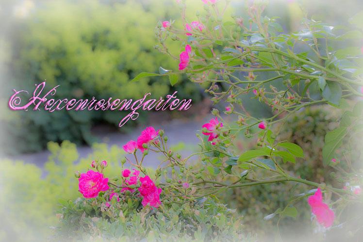 Hexenrosengarten Rosen Lovely Fairy