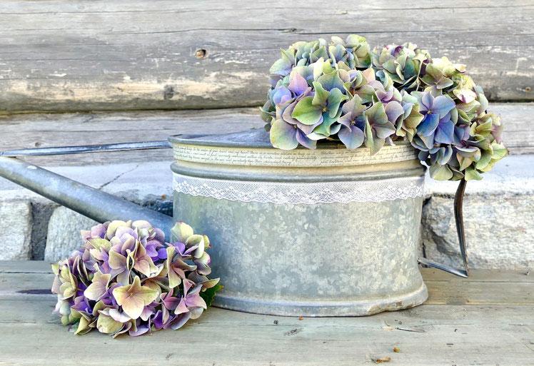 Alte Giesskanne mit Hortensienblüten dekoriert