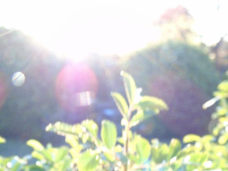 Morgenlicht, Quelle: www.lichtwesenfotografie.com