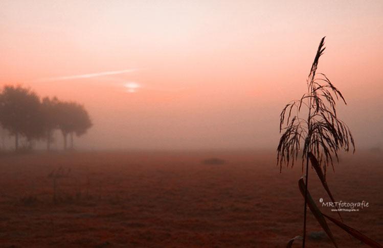 Opkomende zin en mist in de Leusdense weilanden
