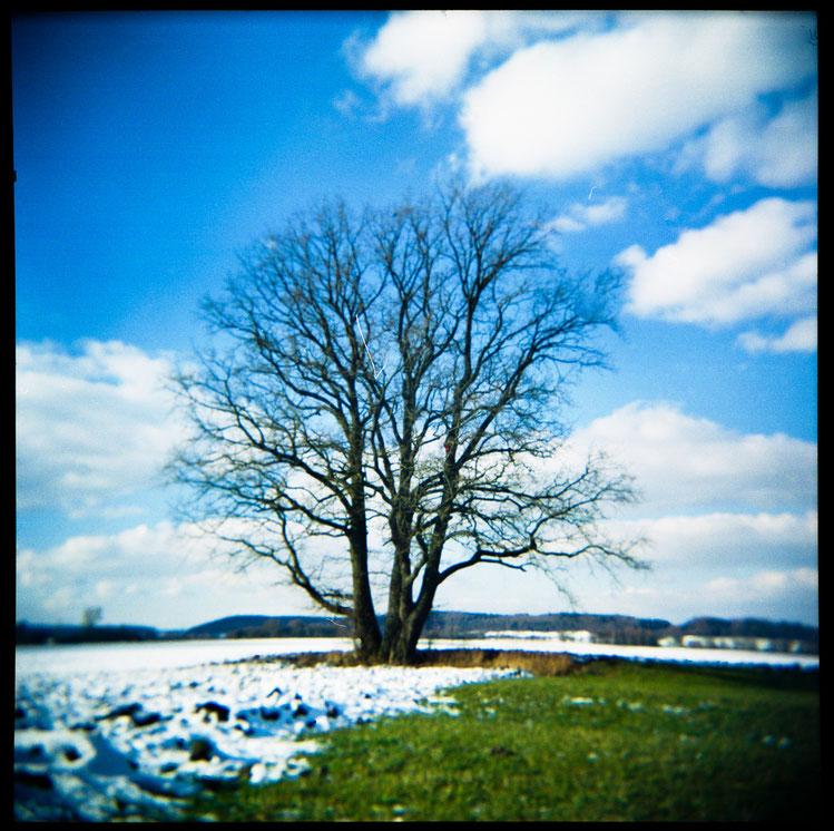 Der frierende Baum