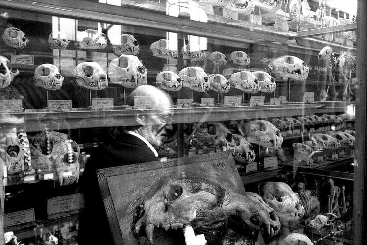 Photographie, noir et blanc, museum d'histoire naturelle, France, Paris, reflet, intérieur, vitrine, crânes, rencontre, personnages, Mathieu Guillochon