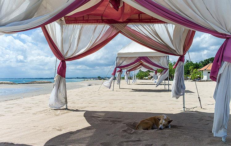 Streuner am Strand von Süd-Bali, Kuta/Indonesien. Aufgenommen mit LEICA M9 und 2,0/35 mm Biogon. Copyright 2013 by Klaus Schoerner