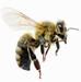 miel de france abeille