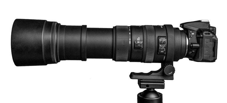Sigma APO 150-500mm F 5,6-6,3 DG OS HSM - an der Nikon D5300