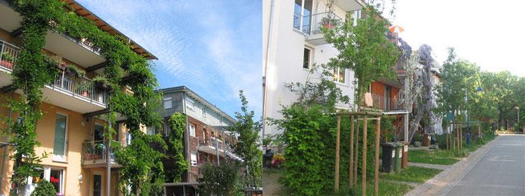 街路樹、前庭、壁面緑化が緑のラインをつなぐ。